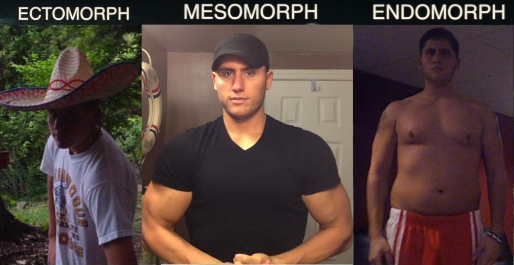 Соматотипы: экзоморф, мезоморф, эндоморф