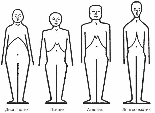 Типы строения тела по Кречмеру